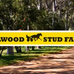 ALLWOOD STUD FARM'S SIRES TO PARADE THIS MONDAY